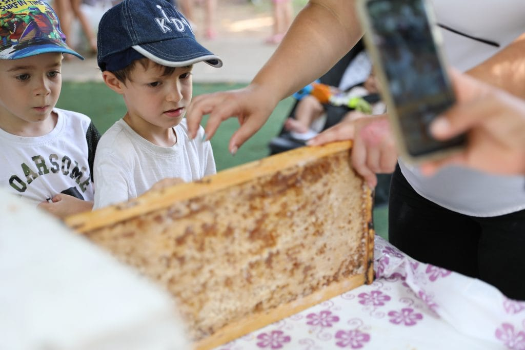 סדנת הדבורים והדבש המתוק