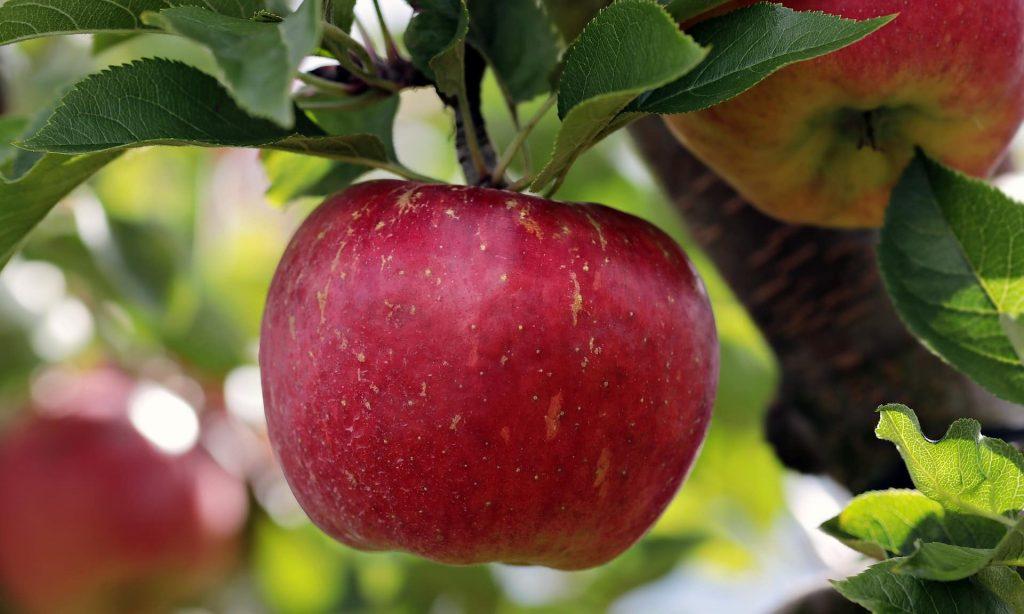 אפיית עוגת תפוחים ודבש