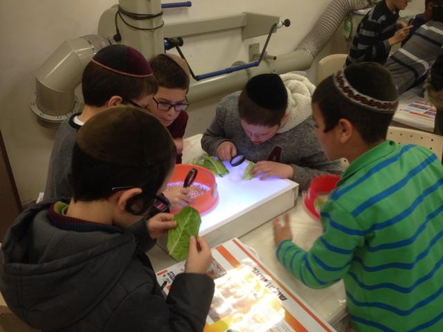 הילדים המדענים בבדיקת הכשרות